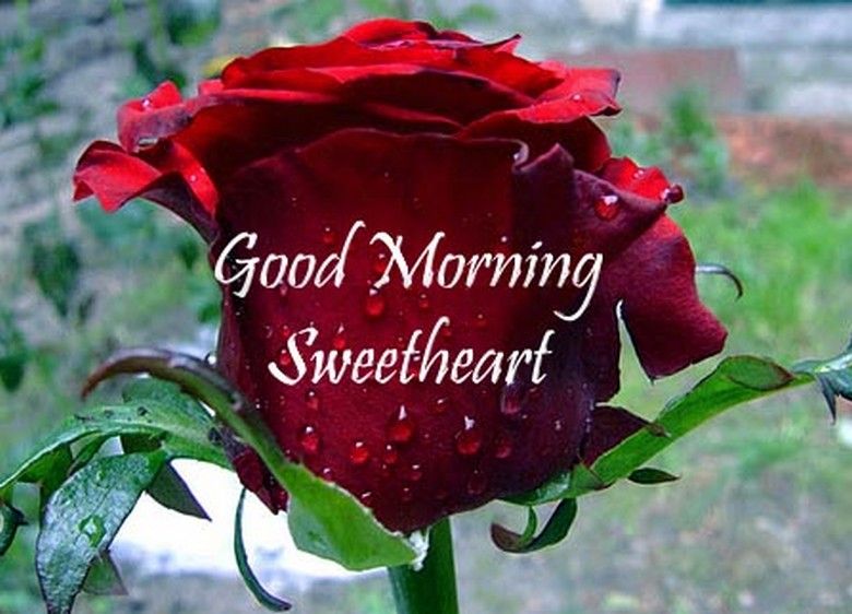 Wallpaper Good Morning My Love : Good Morning images for Lover - cute love wishes