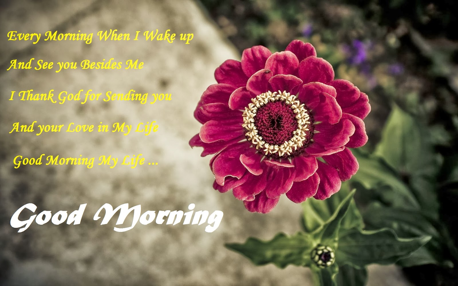 Good Morning Quotes With Flowers. QuotesGram