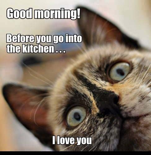 Funny Cat Meme : Funny good morning pics to start a day pic