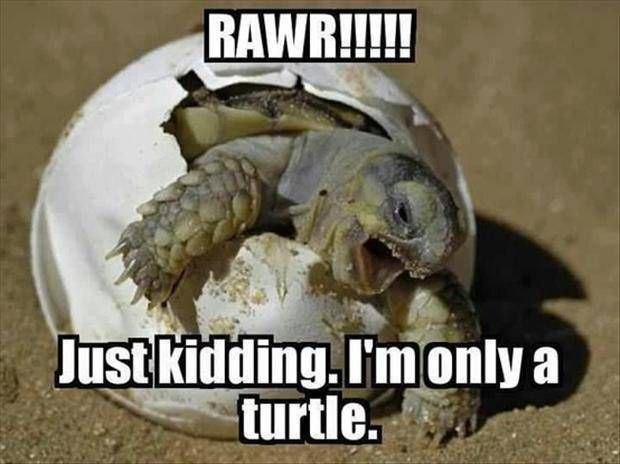Funny images for good morning for friends